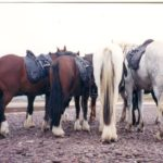 Horse Riding Vacations